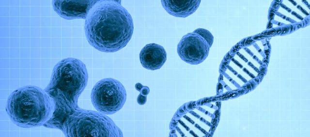 nk-клетки: что значит и какую функцию в человеческом организме они выполняют