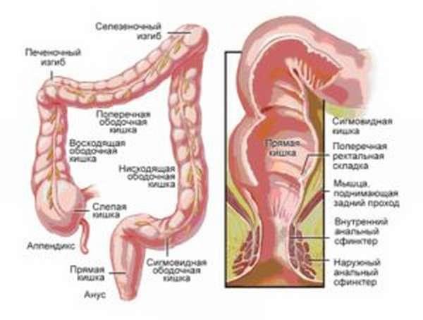 Длина кишечника у человека