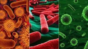 Бактериальная или вирусная инфекция по анализу крови