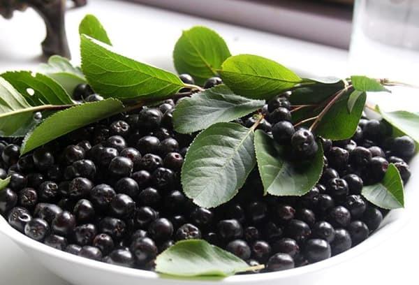 Черноплодка полезные свойства: чем полезна для организма человека