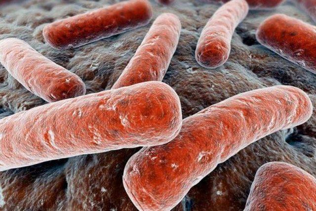 Туберкулез женских половых органов: причины, симптомы, лечение