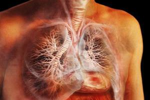 Болезнь коха что это такое: как лечится, как выглядит палочка
