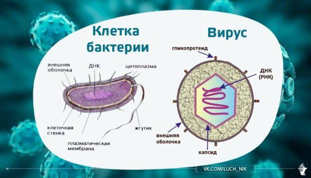 Как отличить вирусную инфекцию от бактериальной